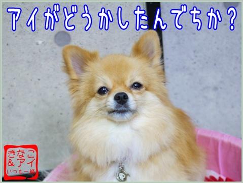 XSA091111b.jpg