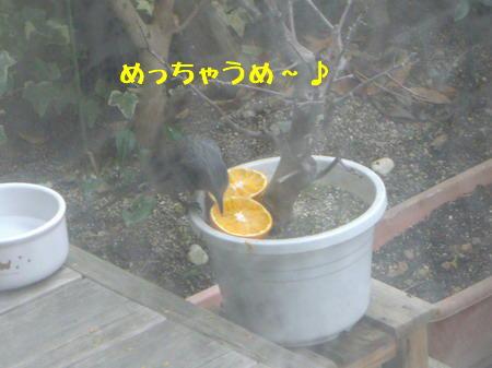 ヒヨちゃん3