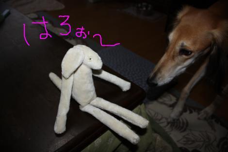 2011 02-08 2