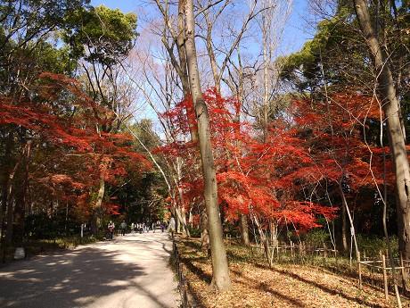04下鴨神社01糺の森