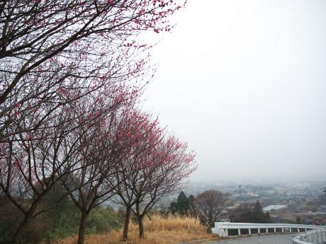 05曽我-遠景