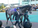 金沢から来ていた北國王冠勝ち馬、タートルベイ