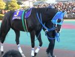 漆黒の馬体が綺麗なアドマイヤスバル