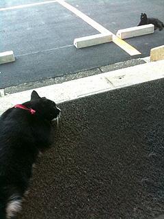 wakooyako1.jpg