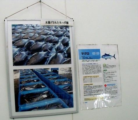 画像ー113 006-2