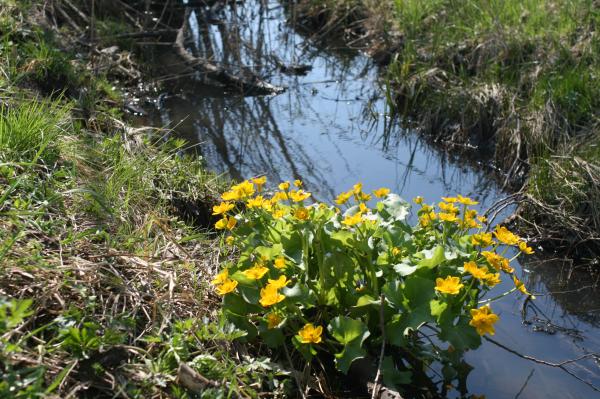 tavasz2011 059