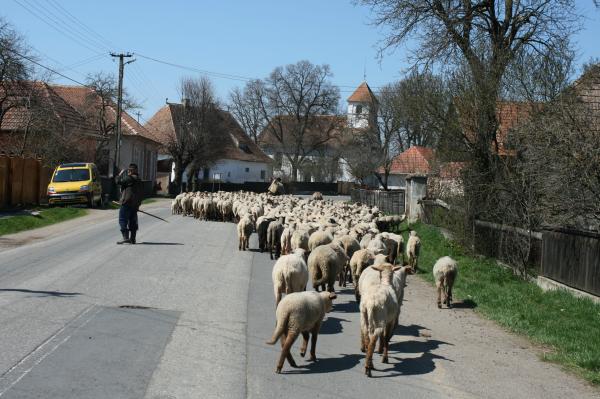 tavasz2011 051