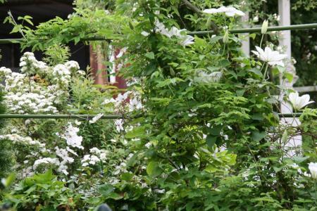 2010-05-05_54_20110409195622.jpg