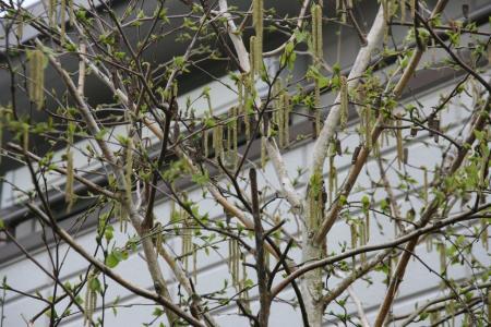 2011-04-15_104.jpg