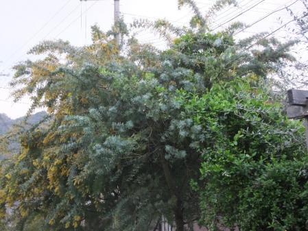 2011-04-25_03.jpg