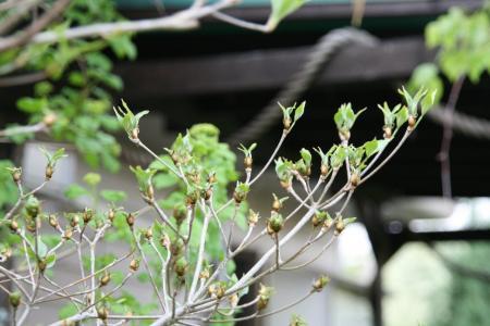 2011-04-26_65.jpg