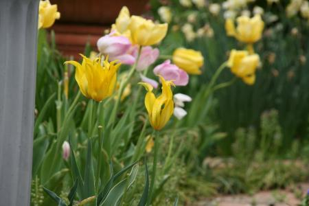 2011-04-28_19.jpg