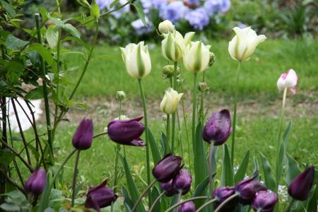 2011-04-28_29.jpg