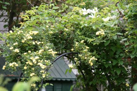 2011-05-06_10.jpg