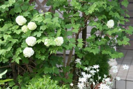 2011-05-08_14.jpg