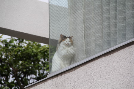 窓辺の三毛