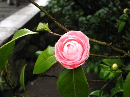 tsurugaoka (2)