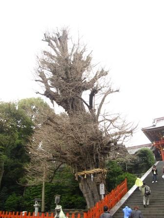 tsurugaoka (7)