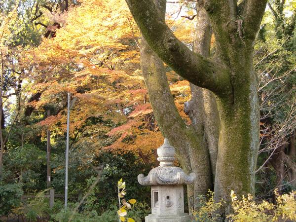 京都御所の神社1