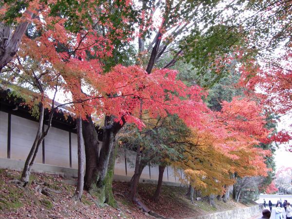 京都東福寺の紅葉の写真1