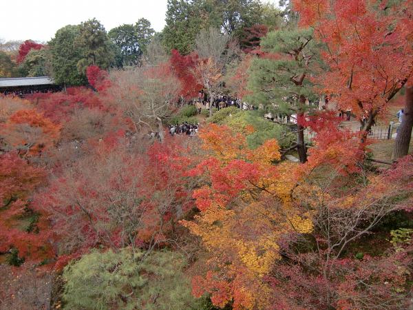 京都東福寺の紅葉の写真3