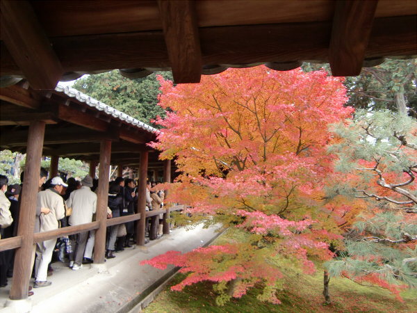 京都東福寺の紅葉の写真4