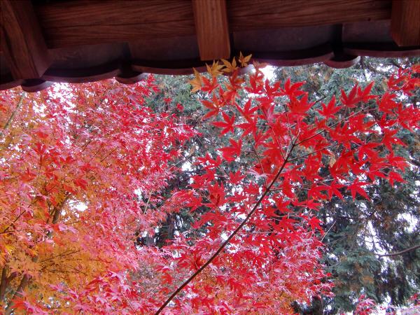 京都東福寺の紅葉の写真5