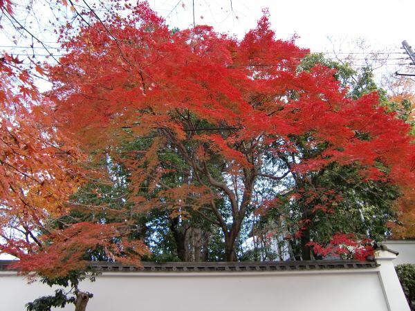 京都東福寺の紅葉の写真6