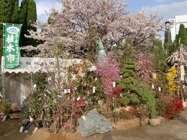 桃と桜と大阪城2