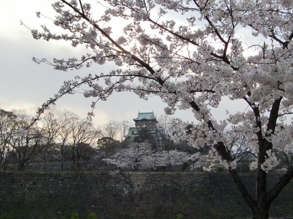 桃と桜と大阪城4