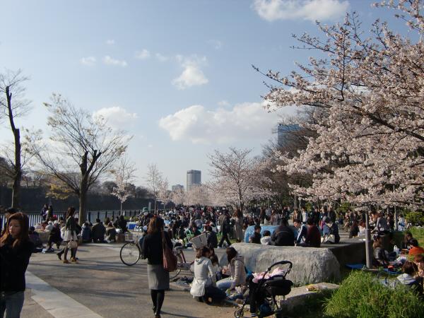 大阪城と某所の桜1