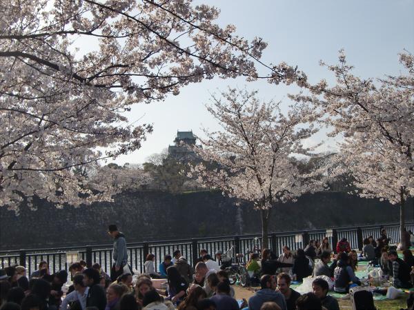 大阪城と某所の桜2
