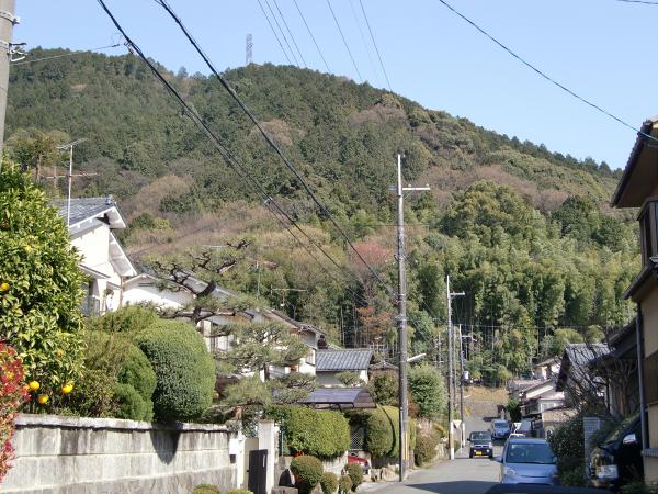 京都醍醐寺の桜の写真1-1
