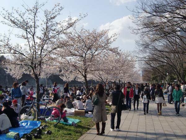 大阪城と某所の桜3