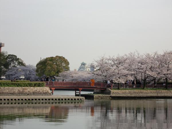 毛馬河川公園の桜1-1