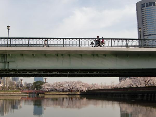 毛馬河川公園の桜1-2