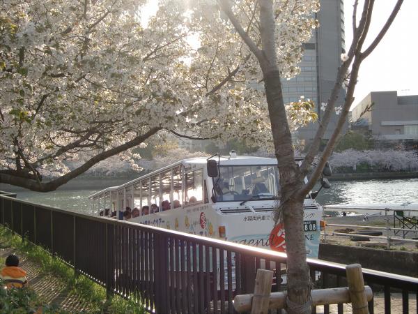 毛馬河川公園の桜1-5