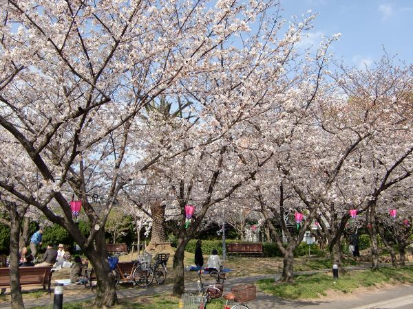 大阪城と某所の桜4