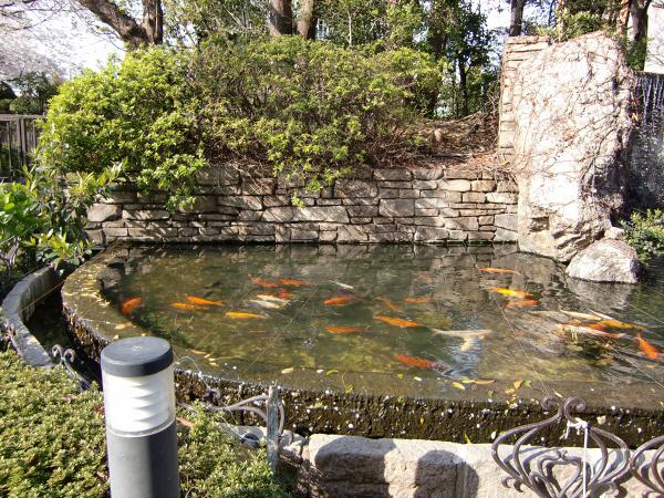 大阪城と某所の桜5