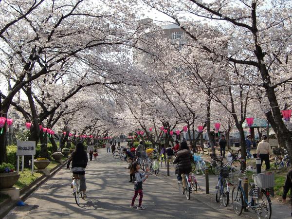 大阪城と某所の桜6