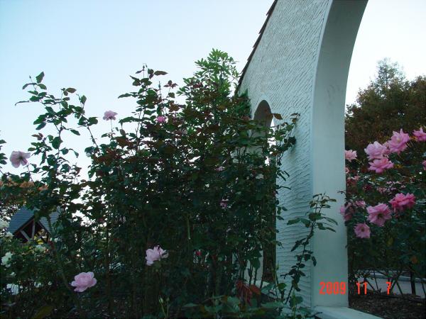おかんが行った荒牧バラ公園の写真04