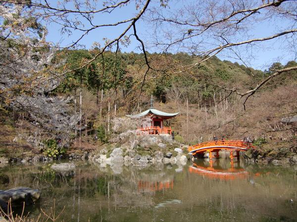 京都醍醐寺の桜の写真2-2