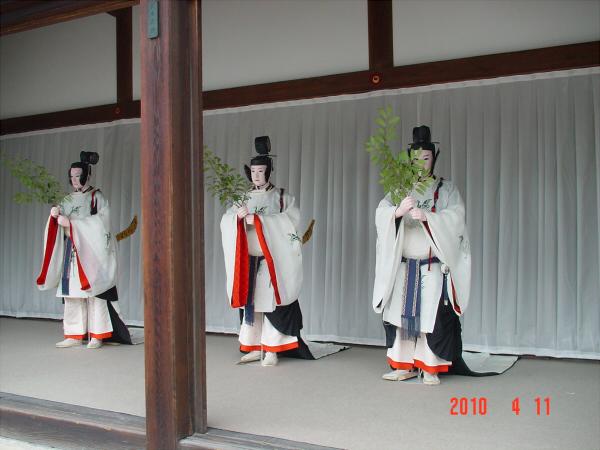 京都御所の枝垂桜4