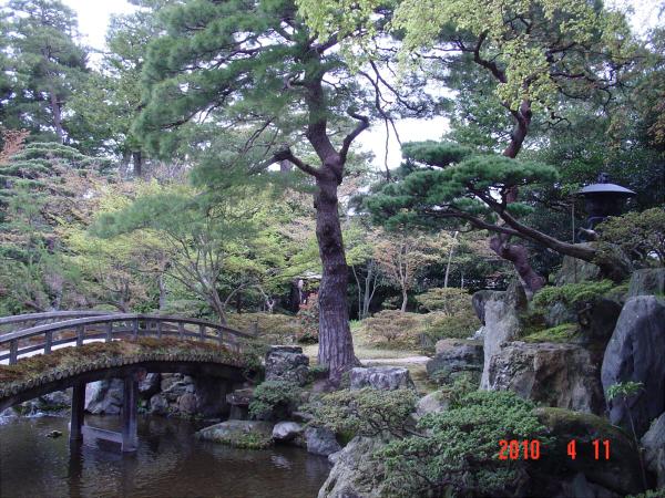 京都御所の枝垂桜6