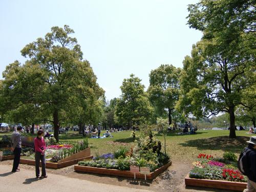 花博記念公園鶴見緑地の花壇01
