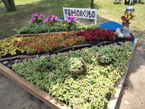 花博記念公園鶴見緑地の花壇09