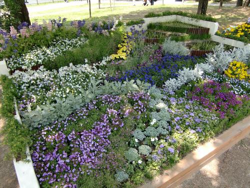 花博記念公園鶴見緑地の花壇13