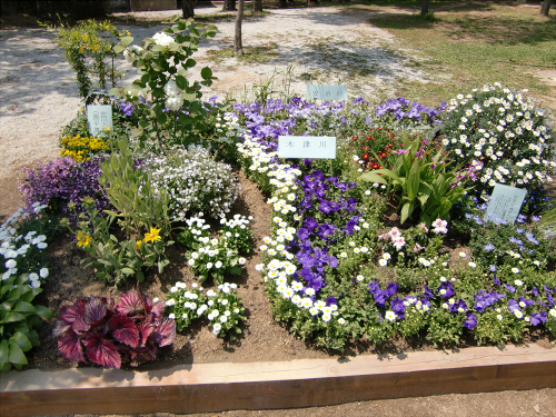 花博記念公園鶴見緑地の花壇17