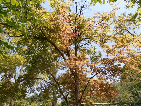 花博記念公園の風景写真2-6