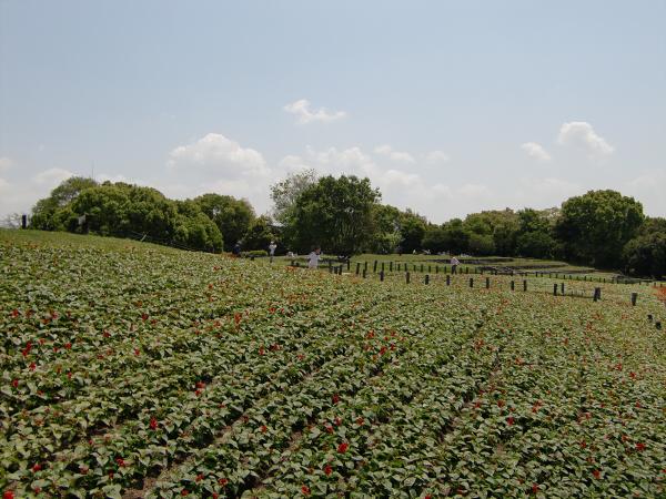 花博記念公園の風景写真3-2